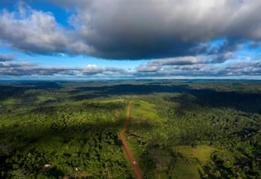 Selva tropical. Foto AFP