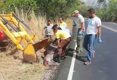 Cortesia: Área de conservación de Guanacaste