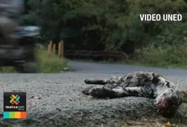 Mortalidad de ranas es el principal reto que enfrentan los expertos en la ruta 257