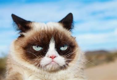 Tomada del facebook oficial de Grumpy Cat