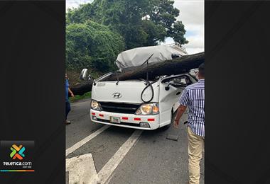 Al menos dos heridos tras caerle un árbol a un microbús con 25 personas en Cartago
