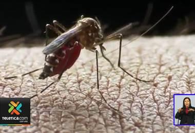 Autoridades de salud alertan sobre un aumento en los casos de dengue