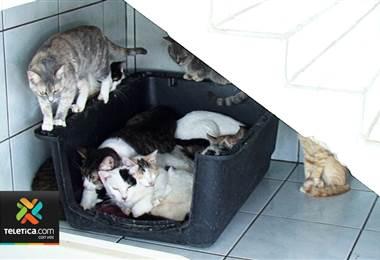 Estudio reveló que los gatos se convirtieron en la mascota preferida de los costarricenses