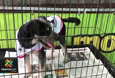 Dos ferias de adopción de mascotas se realizarán este domingo