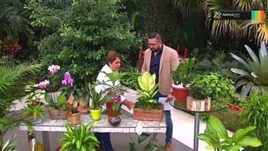 Le mostramos las mejores plantas para su hogar