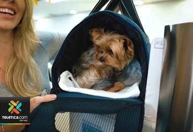 En los últimos cuatro años se duplicaron los permisos para sacar una mascota del país