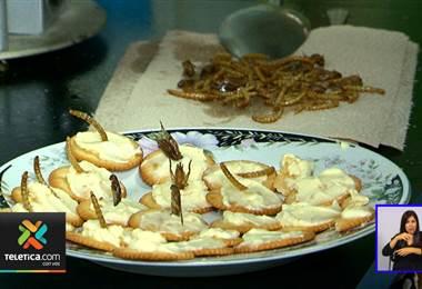 UCR promueve la creación de alimentos a base de insectos como grillos, avispas y larvas