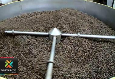 Productores de café de naranjo sufren las consecuencias de la baja en el precio internacional