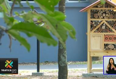 UCR instala hoteles para abejas con el objetivo de proteger estos insectos