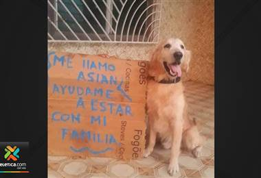 Familia venezolana vende repostería para poder traer a su perrito que quedó solo en Venezuela