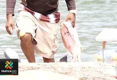 Pescadores inscritos en Incopesca recibirán ayuda por la veda que se aplicará en Golfo de Nicoya
