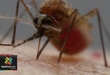 Autoridades están en alerta por los cuatro casos confirmados de malaria en Limón