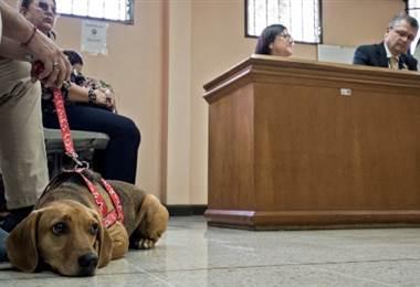 Primer juicio por maltrato animal en Costa Rica. Foto AFP