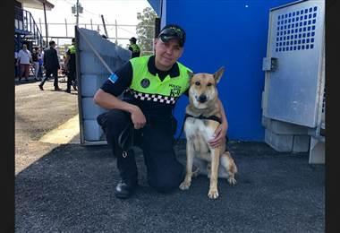 Dos perros se jubilaron de sus labores como policías en San José
