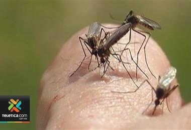 Ministerio de Salud pide reforzar la eliminación de criaderos de mosquitos para prevenir el dengue