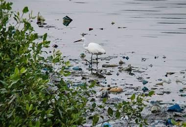 Informe de la OMS sobre microplásticos