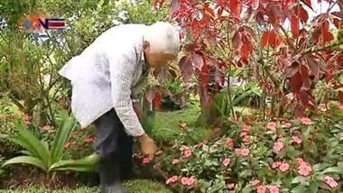 El jardinero de san martín
