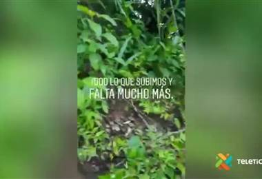 Ciudadanos rescatan dos perros en peligro en la cima de una montaña en Puntarenas