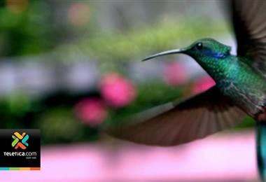 ONU nombra a Costa Rica Campeón de la Tierra 2019 por su compromiso con el medio ambiente
