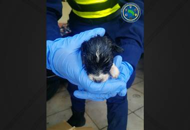 Fuerza Pública rescata a 7 cachorros abandonados