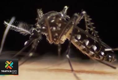 Sarapiquí y Limón son las zonas más afectadas por el dengue