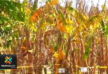 El servicio fitosanitario del estado toma medidas de urgencia para impedir el ingreso de un hongo