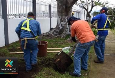 Mañana sábado se llevará a cabo a nivel mundial una campaña para que cada ciudadano plante un árbol