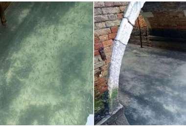 Algunas de las zonas de canales de Venecia con agua prácticamente transparente (M. Bettoni / M. Capovila)