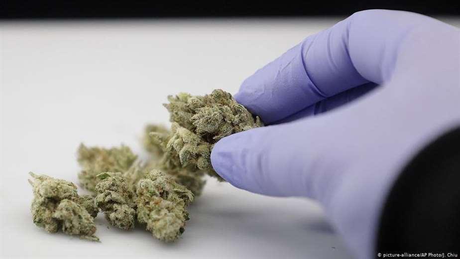 puede-proteger-el-cannabis-contra-el-coronavirus