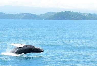 Fotos cortesía de Planet Dolphin Catamarán Eco Adventures.