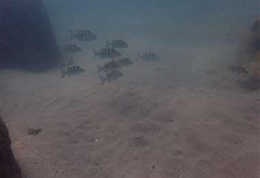 Fotos tomadas de Punta Leona Sostenible